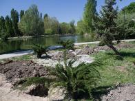 Высадка экзотических деревьев в Гагаринском парке Симферополя